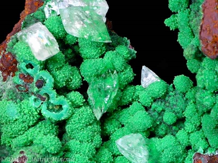 Conichalcite from Mapimi dist., Durango, Mexico - 33420