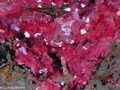 Cuprite