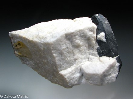 Columbite-(Fe) - PD34521